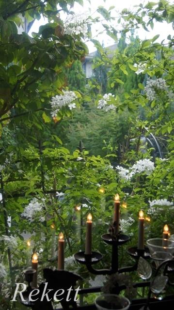 窓から眺めるホワイトカラーの花~_f0029571_00220950.jpg