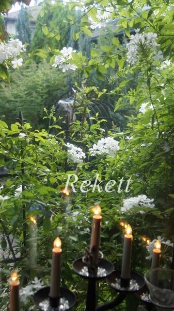 窓から眺めるホワイトカラーの花~_f0029571_00253072.jpg
