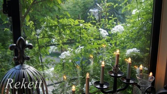 窓から眺めるホワイトカラーの花~_f0029571_00260434.jpg