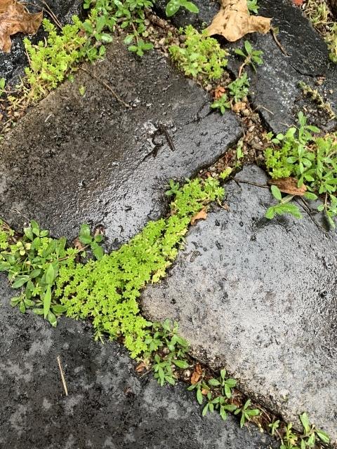 梅雨と相性の良いアプローチとグリーンの効果_c0274374_00175267.jpeg