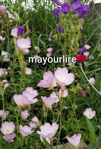 庭の花たち_d0169179_00070343.jpg