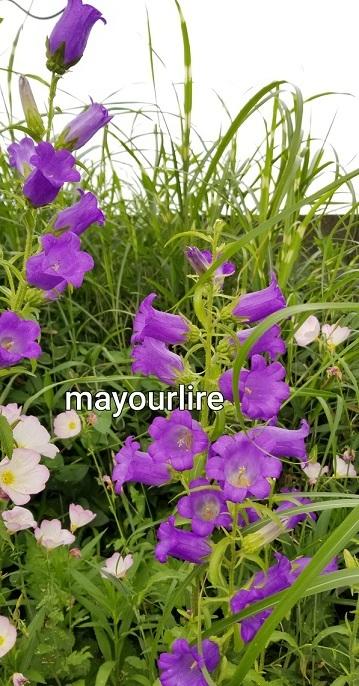 庭の花たち_d0169179_00073189.jpg