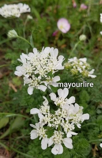 庭の花たち_d0169179_00084676.jpg