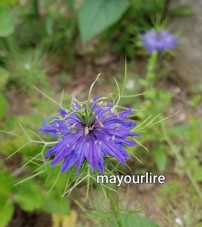庭の花たち_d0169179_00102013.jpg