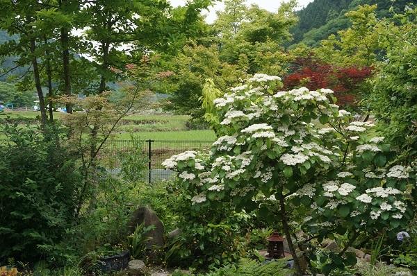 お風呂から見える庭_e0365880_14470747.jpg