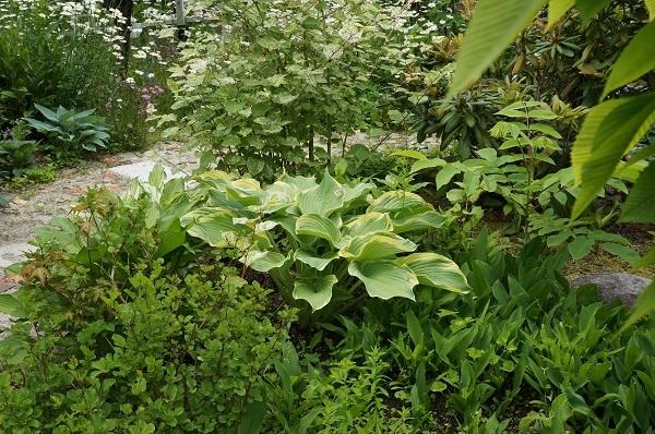 お風呂から見える庭_e0365880_15083431.jpg