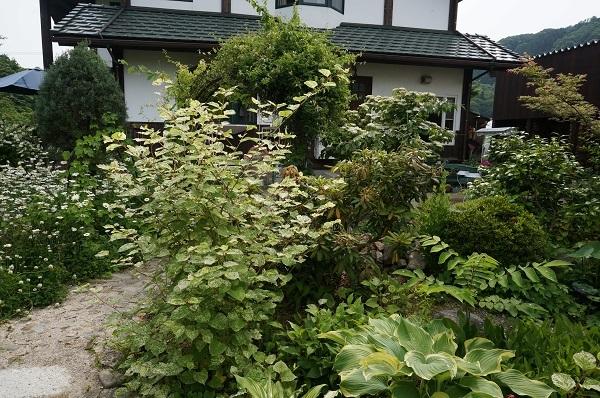 お風呂から見える庭_e0365880_15255257.jpg