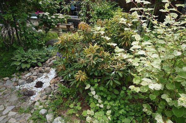 お風呂から見える庭_e0365880_15262787.jpg