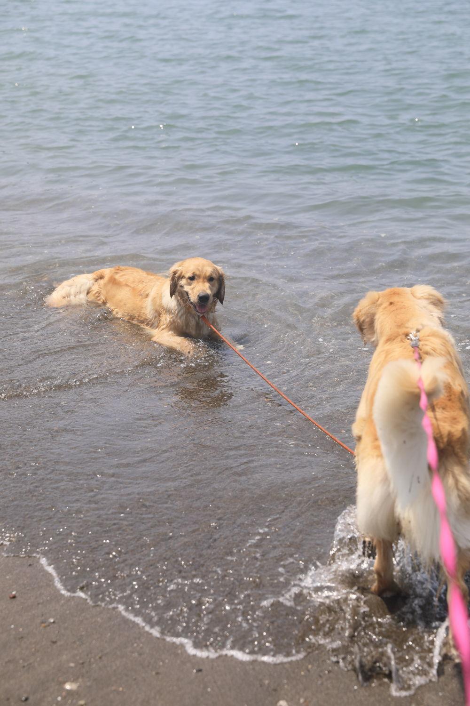 姉妹揃って初泳ぎ♪_b0275998_23033967.jpg