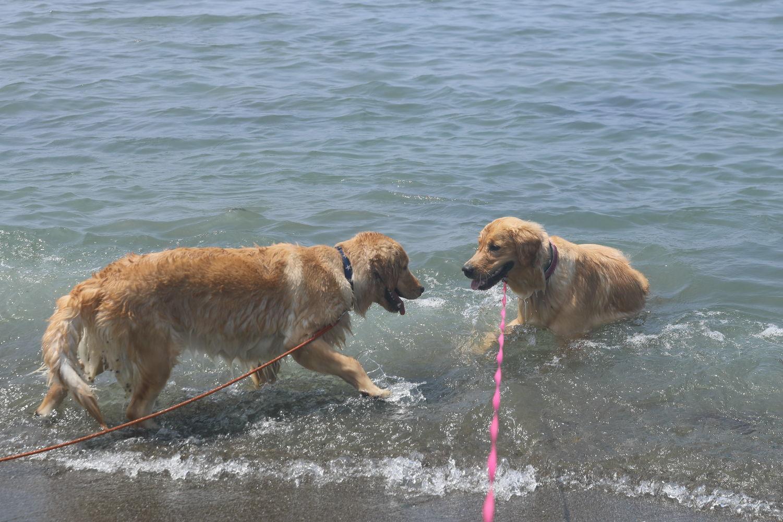 姉妹揃って初泳ぎ♪_b0275998_23081702.jpg