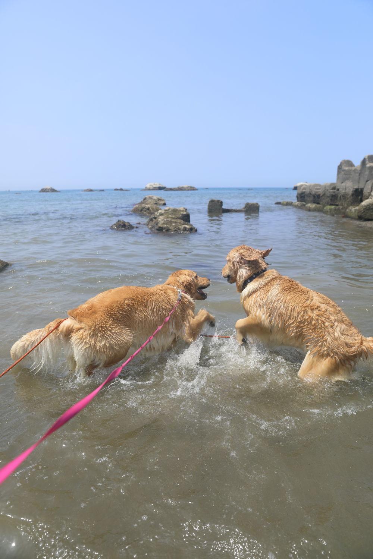 姉妹揃って初泳ぎ♪_b0275998_23091235.jpg