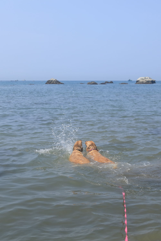 姉妹揃って初泳ぎ♪_b0275998_23091702.jpg