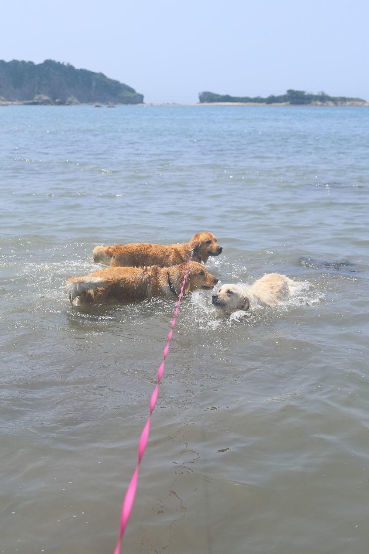 姉妹揃って初泳ぎ♪_b0275998_23135243.jpg