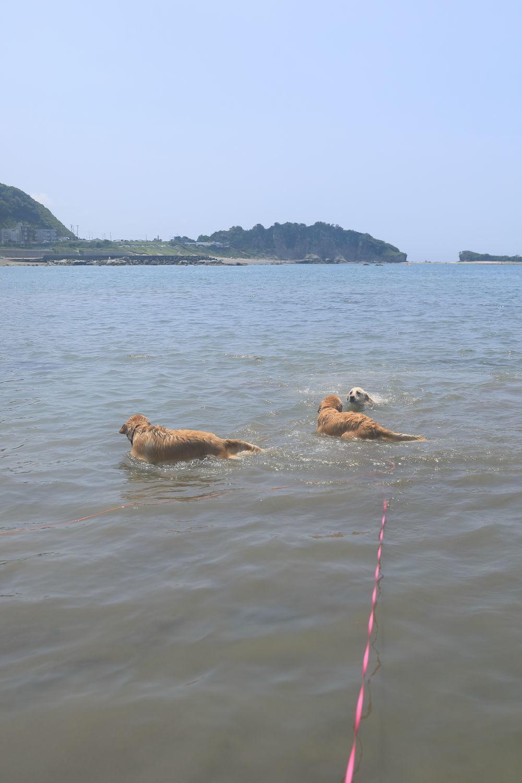 姉妹揃って初泳ぎ♪_b0275998_23140748.jpg