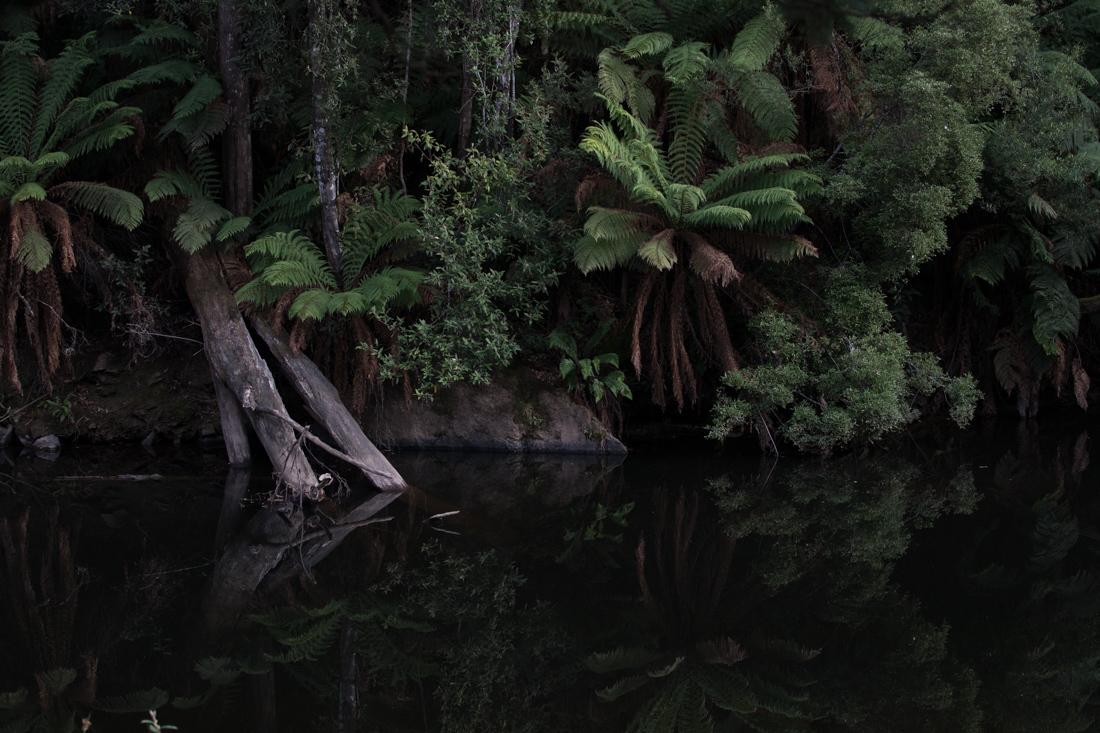 鏡面効果の高い川面 <タスマニア>_c0248100_20295252.jpg