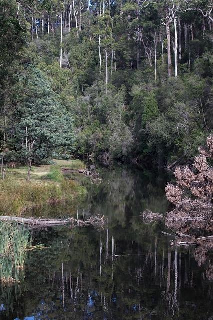 鏡面効果の高い川面 <タスマニア>_c0248100_20295274.jpg