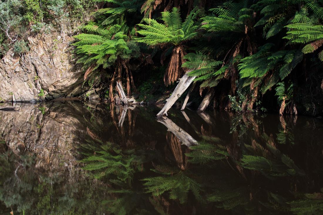 鏡面効果の高い川面 <タスマニア>_c0248100_20295297.jpg