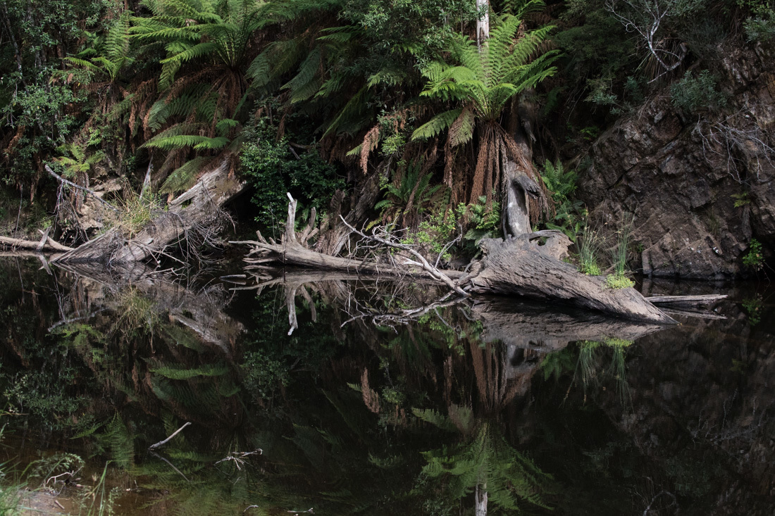 鏡面効果の高い川面 <タスマニア>_c0248100_20295329.jpg