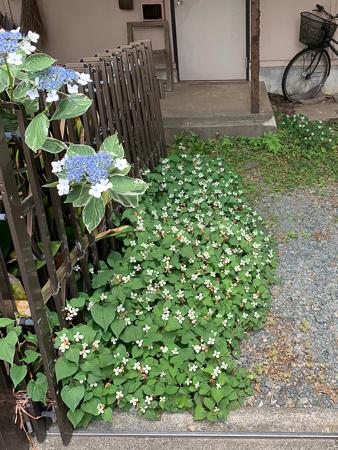 6月の庭  2020 - 1_f0239100_21033396.jpg