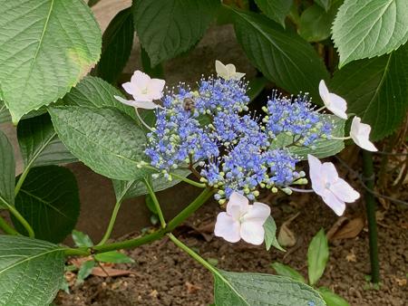 6月の庭  2020 - 1_f0239100_23463696.jpg