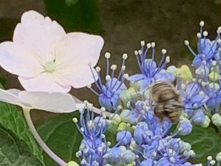 6月の庭  2020 - 1_f0239100_23521849.jpg