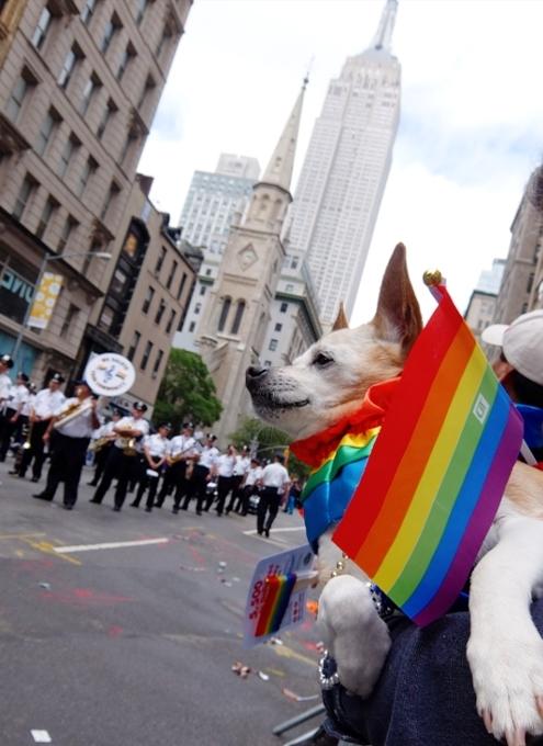 今年、ニューヨークのゲイ・パレード(LGBTQ+ NYC Pride Rally)はバーチャル開催へ_b0007805_22505403.jpg