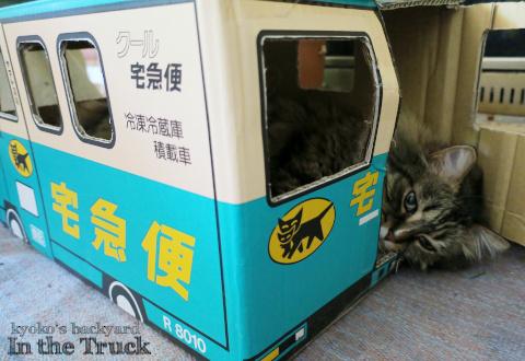 クロネコトラック常駐中の猫に枕を進呈_b0253205_02125619.jpg