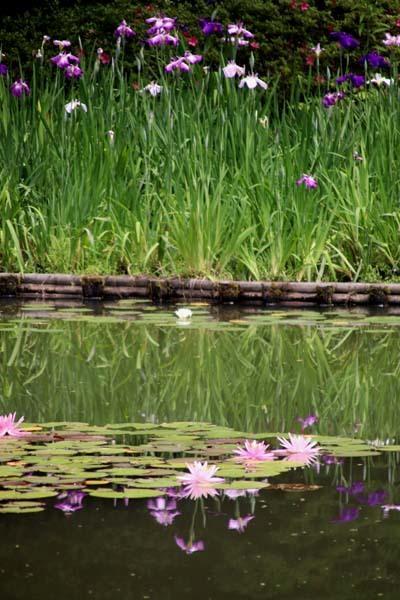 平安神宮 神苑の花菖蒲など_e0048413_20255914.jpg