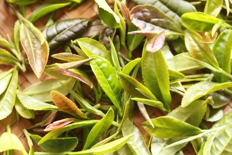 お茶をつくる 発酵編_b0220318_12214874.jpg