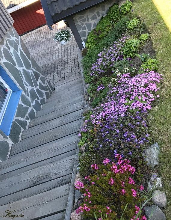 庭の花_a0353839_03534652.jpg