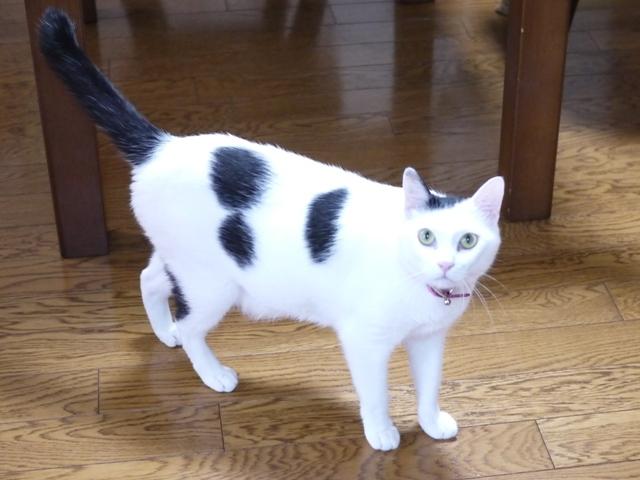 猫のお留守番 たらくん編。_a0143140_19503563.jpg