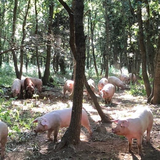 放牧飼育存続への署名とパブリックコメントのお願い_c0133561_00172919.jpg