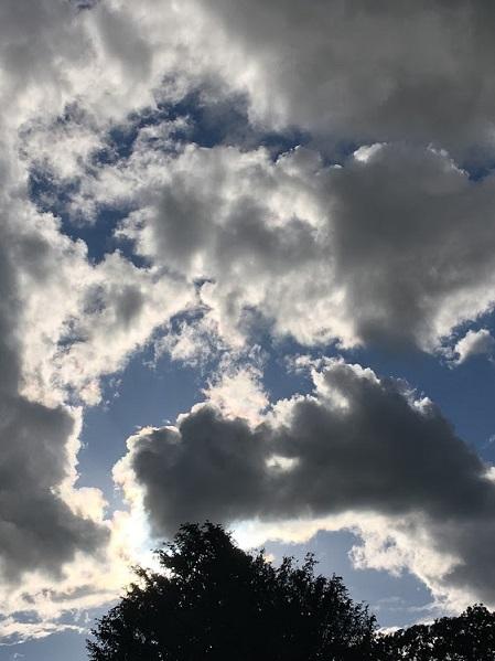 コロナ Day80  レナ―タの物語(14)_c0400569_07200904.jpg