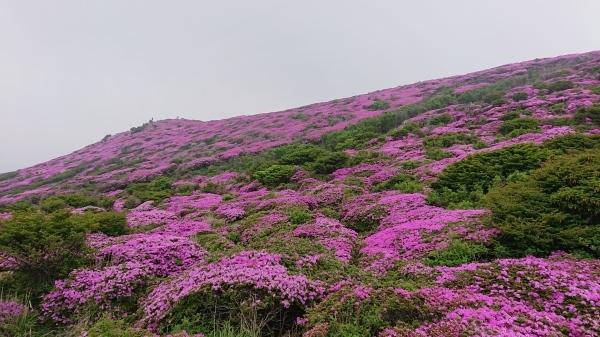 くじゅう~平治岳ミヤマキリシマ登山_e0262382_22003599.jpg