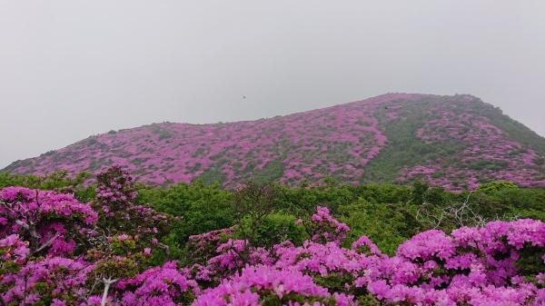 くじゅう~平治岳ミヤマキリシマ登山_e0262382_22012430.jpg