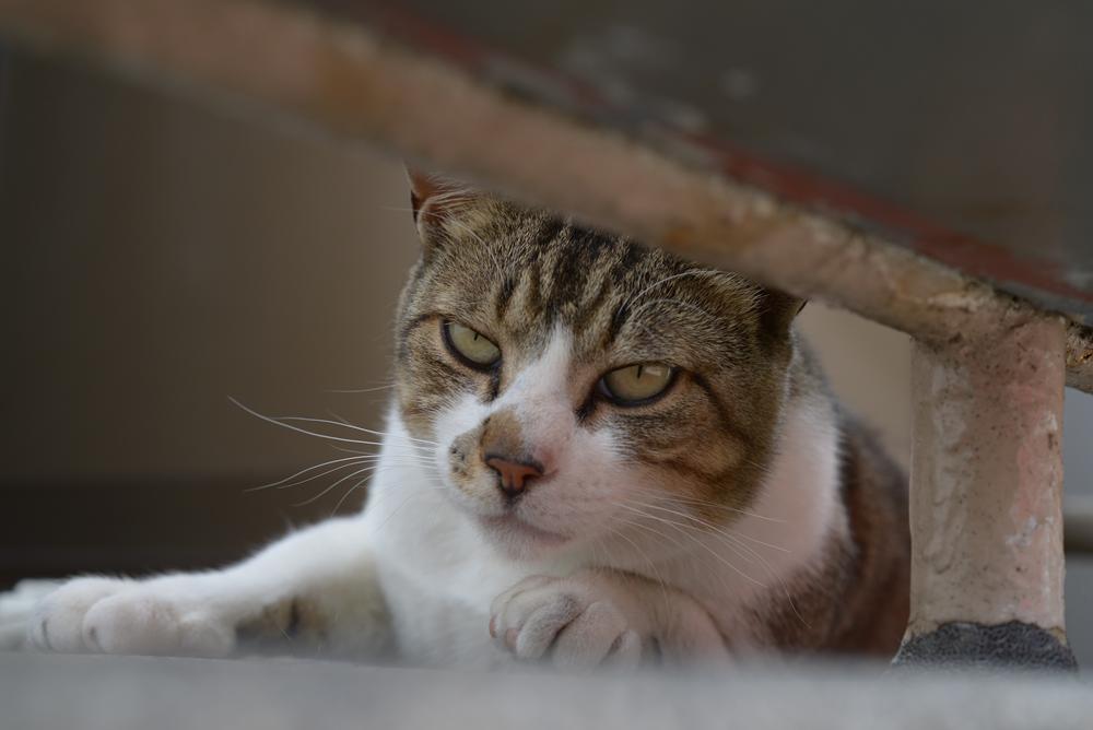 お寺のネコ様の近況_f0159784_07471912.jpg