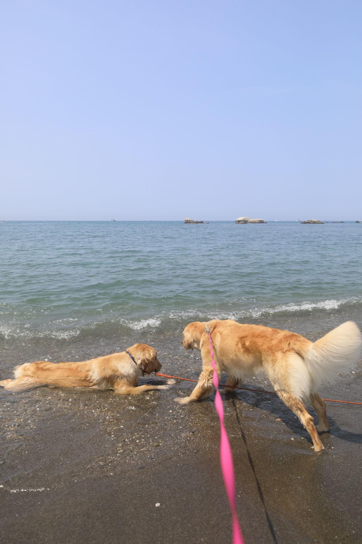 姉妹揃って初泳ぎ♪_b0275998_19160522.jpg