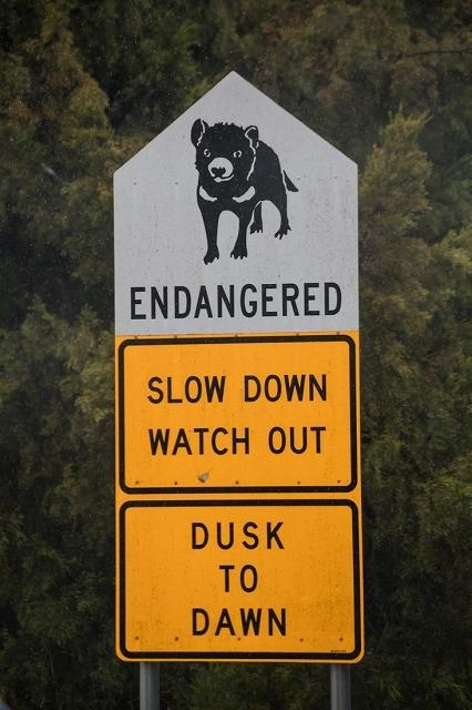 動物注意の標識 <タスマニア>_c0248100_17531542.jpg