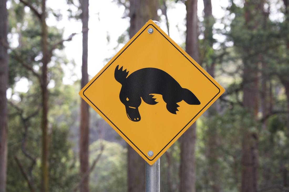 動物注意の標識 <タスマニア>_c0248100_17531567.jpg