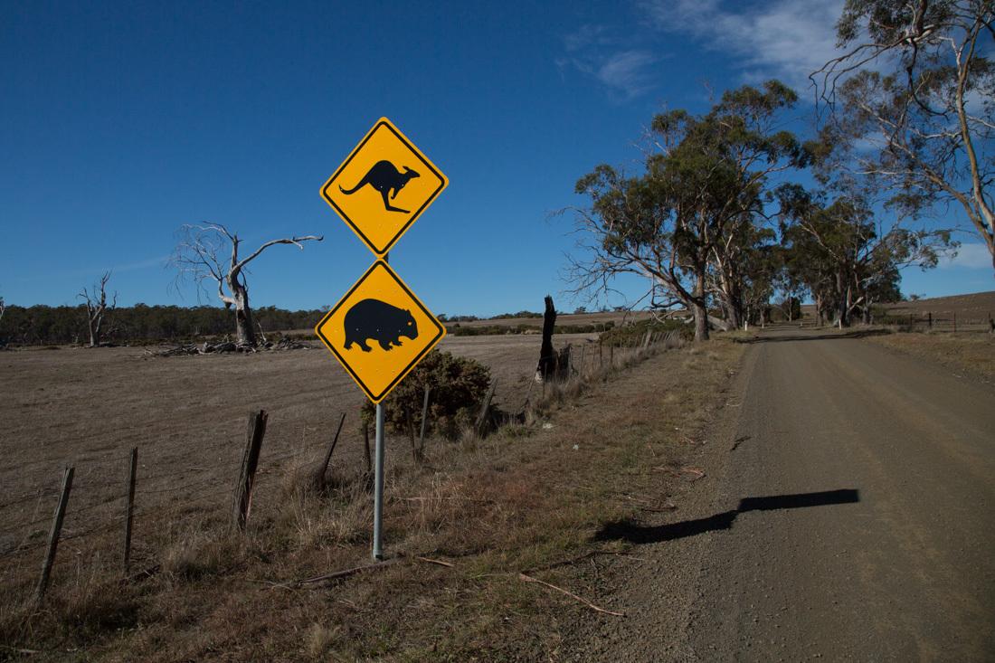 動物注意の標識 <タスマニア>_c0248100_17531569.jpg