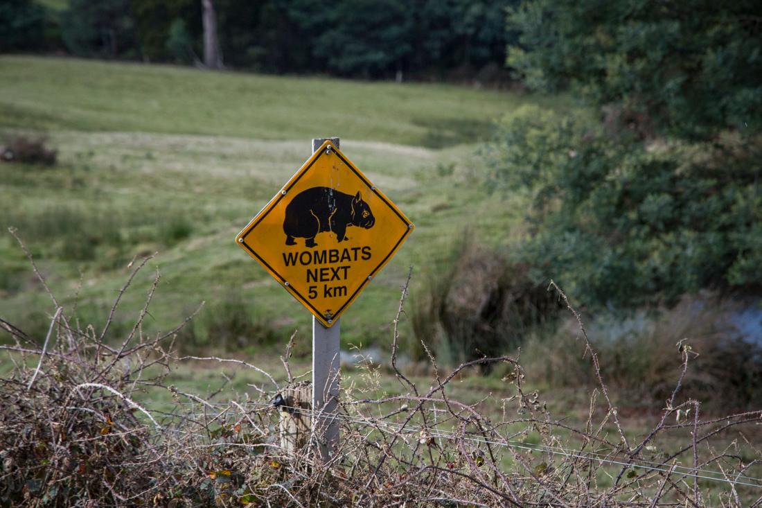 動物注意の標識 <タスマニア>_c0248100_17531589.jpg