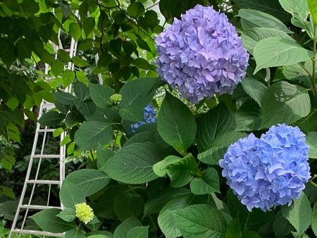 6月の庭  2020 - 1_f0239100_00345165.jpg