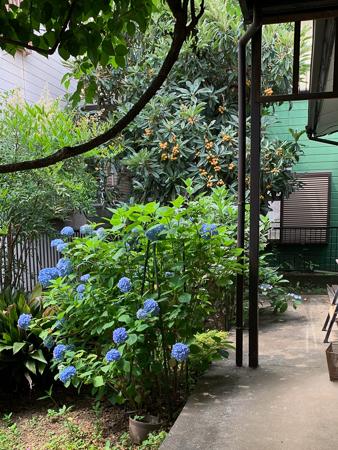 6月の庭  2020 - 2_f0239100_00532789.jpg