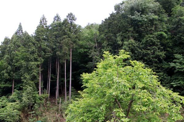 畑の近くの谷川で_e0048413_17271084.jpg