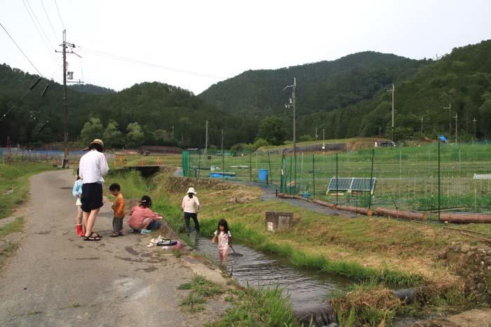畑の近くの谷川で_e0048413_17272035.jpg