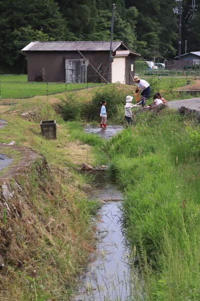 畑の近くの谷川で_e0048413_17273346.jpg