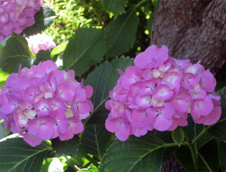 """■ご近所の """"日曜日の花たち""""、 そして週替わりの夕暮れ[6/7]_d0190217_22165928.jpg"""