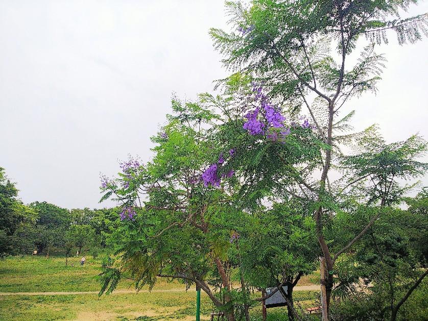 八幡屋公園_a0098418_17105536.jpg