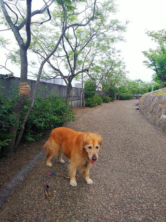 八幡屋公園_a0098418_17105663.jpg