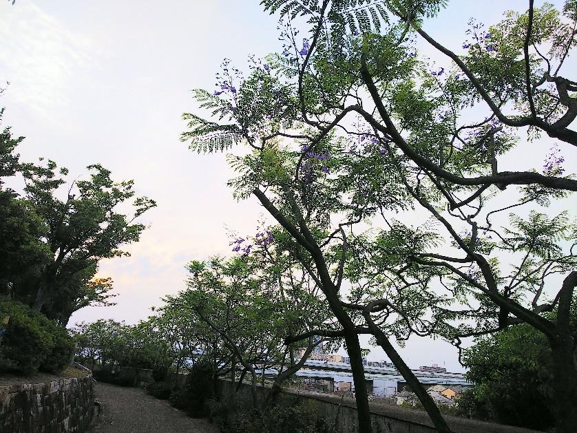 八幡屋公園_a0098418_17105674.jpg